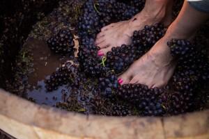 things to do in lake chelan, lake chelan winery, lake chelan wine,